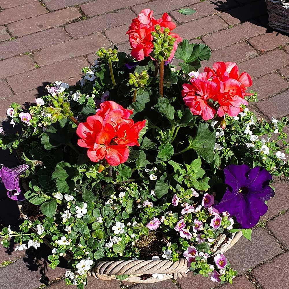 Kanbier's Dochter Bloemen & Planten