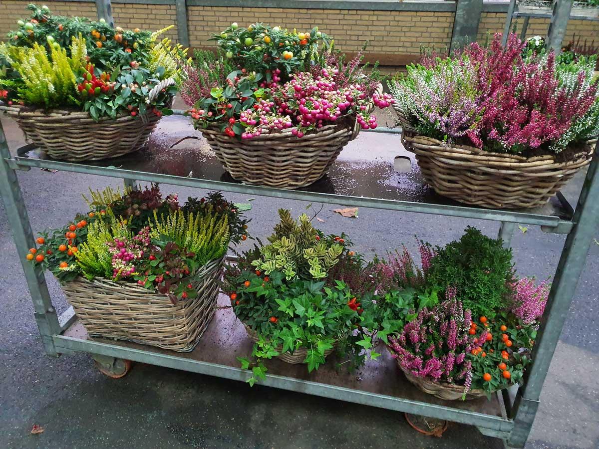 Bloemen & Planten Leiden - Kanbier's Dochter