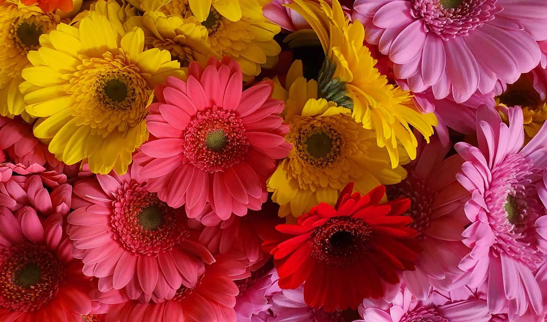 Kanbierbier bloemen winkel in Leiden